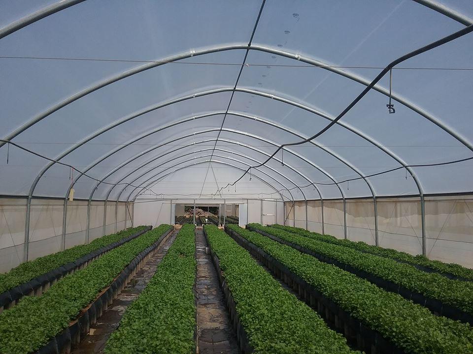 hydroponics system, BIC Farms, Adebowale Onafowora, System