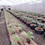 BIC Farms, hydroponics