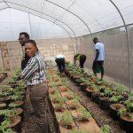 BIC Farms, hydroponics, training