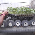 BIC Farms, hydroponics, vegetable farming, tomatoes