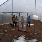 BIC Farms, hydroponics, greenhouse