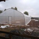 BIC Farms, hydroponics, greenhouse