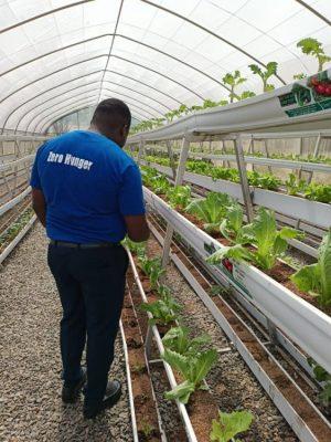 Growing vegetables with Debo